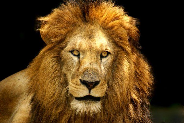Ciondoli, animali e simbolismo: quale ti rappresenta?