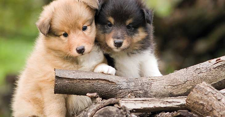 Cuccioli e animali domestici: ecco dove e come trovarli