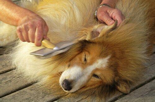 Il pelo del cane