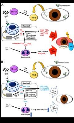 Juntendo University Research: Omega-3 Fatty Acids Suppress Allergic Conjunctivitis Symptoms